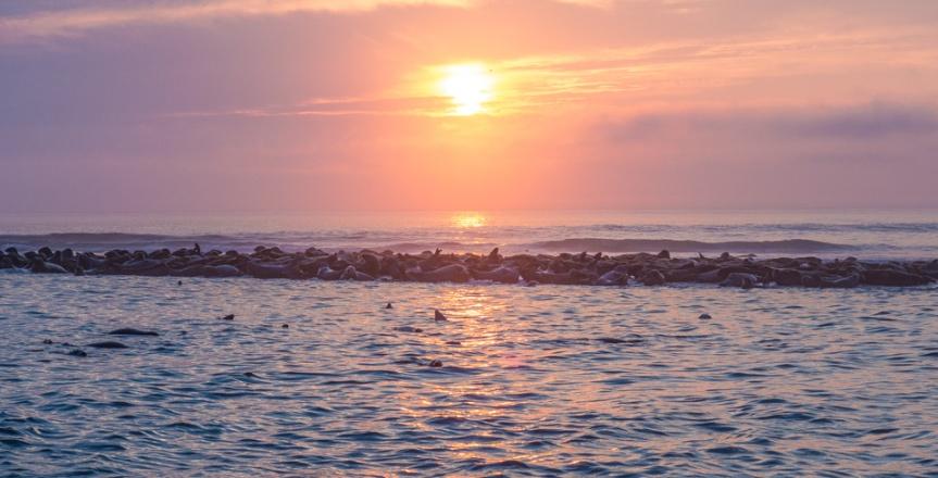 Grey Seals at Coast Guard Beach