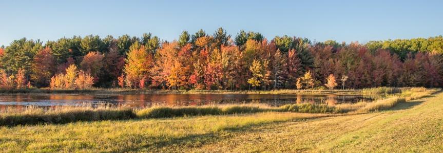 Autumn colors on TempleRoad