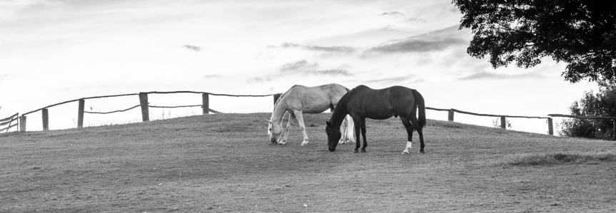 Tuesday Photo Theme –#EquineTuesday