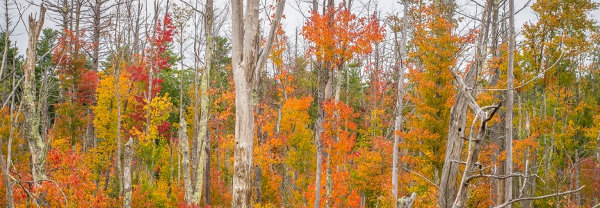 Autumn colors at TophetSwamp