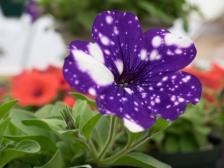 amazingflowerfarm-20160430-23
