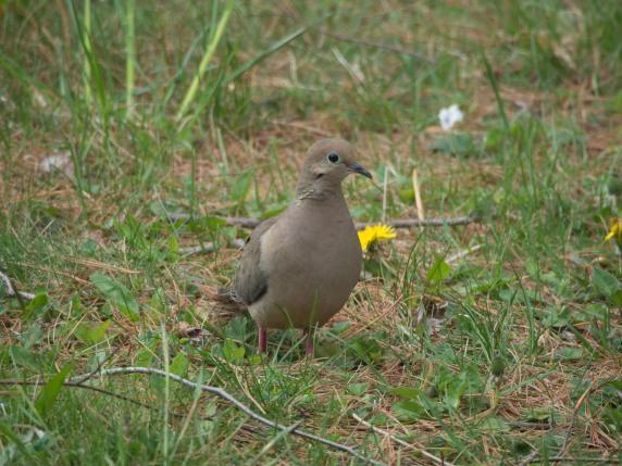 backyardbirds-20160506-15