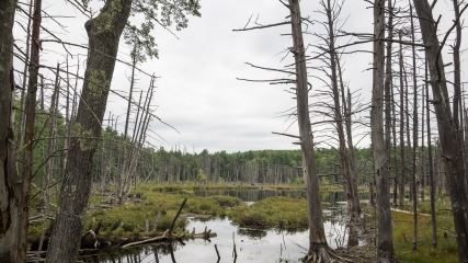 Swamp on Dudley Road, Towsend, MA
