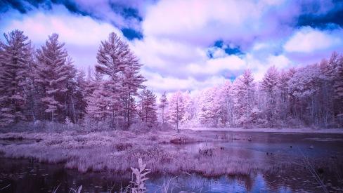 Waterloom Pond in New Ipswich, NH