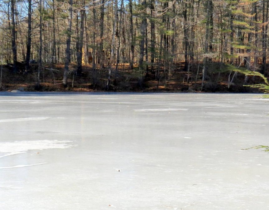 2-icy-pond